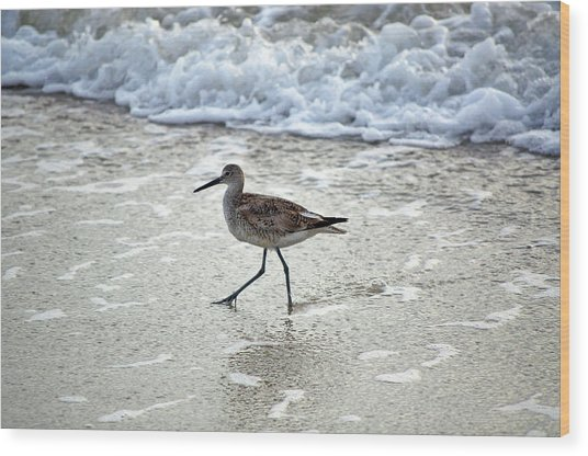 Sandpiper Escaping The Waves Wood Print