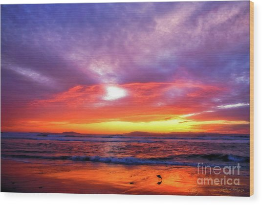 Sandpiper Sunset Ventura California Wood Print