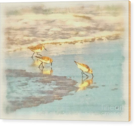 Sandpipers Along The Shoreline Wood Print