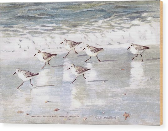 Sandpipers On Siesta Key Wood Print