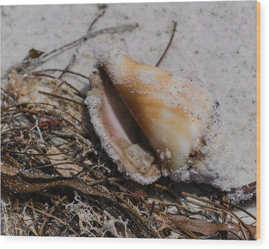 Sandy Seashore Treasures Wood Print