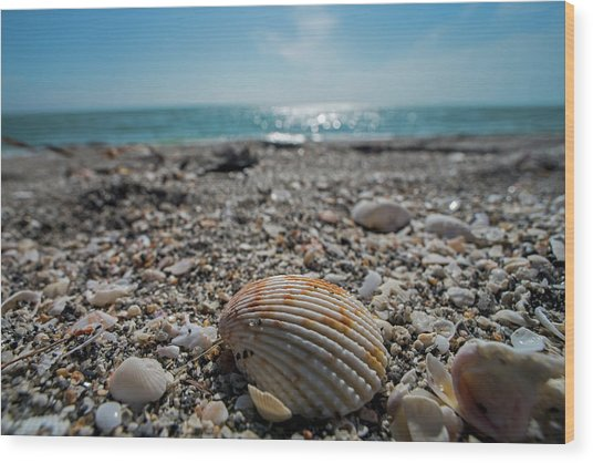 Sanibel Island Sea Shell Fort Myers Florida Wood Print