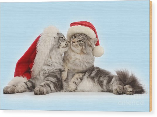 Santas Kissing Cats Wood Print