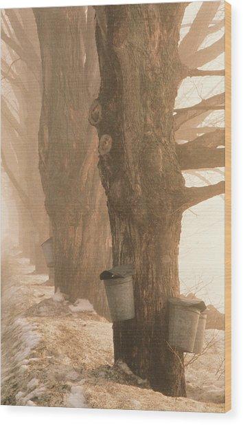 Sap Buckets. Underhill, Vermont Wood Print