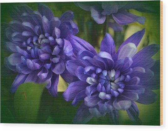 Sapphire Blue Chrysanthemums Wood Print