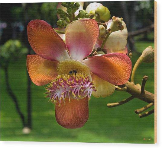 Sara Tree Flower Dthb104 Wood Print