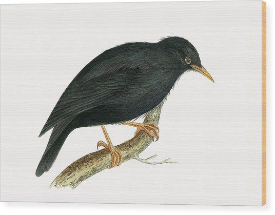 Sardinian Starling Wood Print