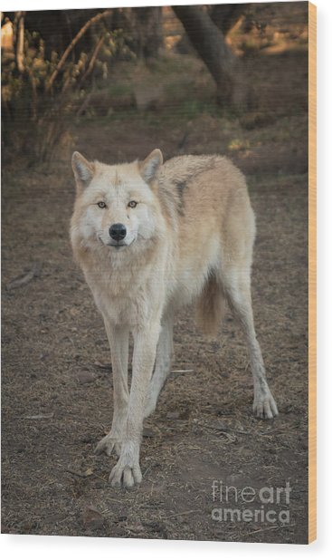 Sassy Wolf Wood Print