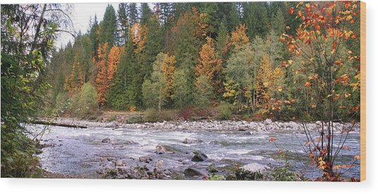 Sauk River Fall Colors Panorama Wood Print by Mary Gaines
