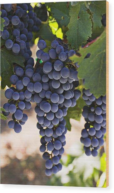 Sauvignon Grapes Wood Print