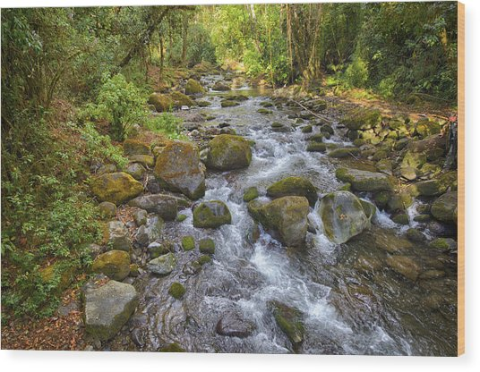 Savegre River - Costa Rica 3 Wood Print