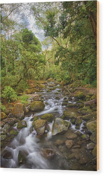 Savegre River - Costa Rica 5 Wood Print