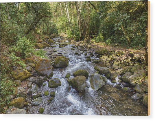 Savegre River - Costa Rica Wood Print