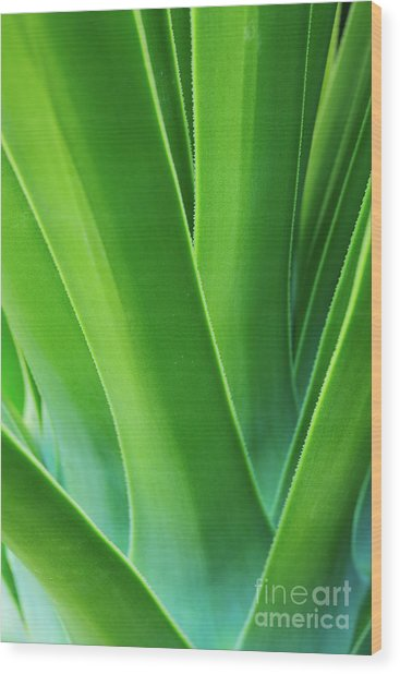 Saw Blades Wood Print by Steven Dillon