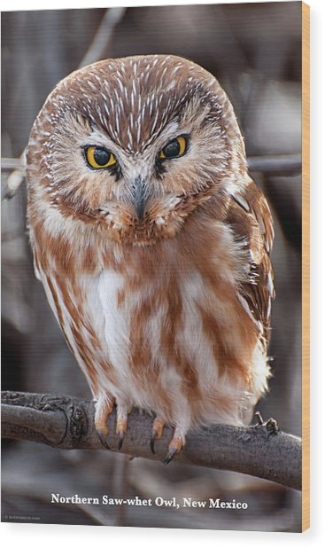 Saw-whet Owl Wood Print