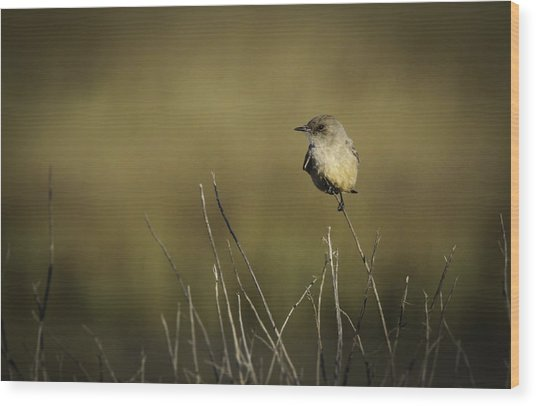 Say's Flycatcher Wood Print