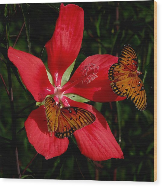 Scarlet Beauty Wood Print
