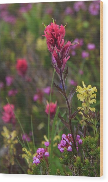 Scarlet Paintbrush Wood Print