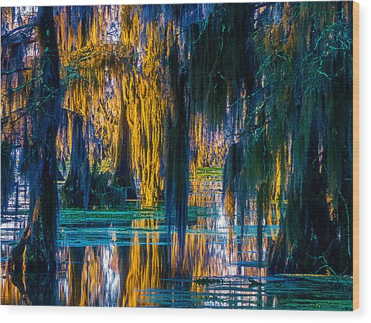 Scary Swamp In The Daytime Wood Print