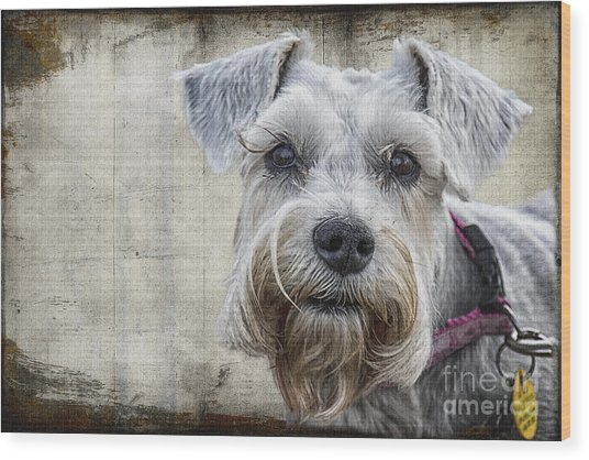 Schnauzer Fellow Wood Print