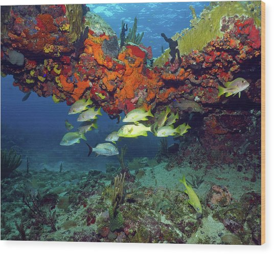 Schooling Fish At Calf Rock Wood Print
