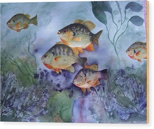 School's Out - Bluegills Wood Print by Audrey Bunchkowski