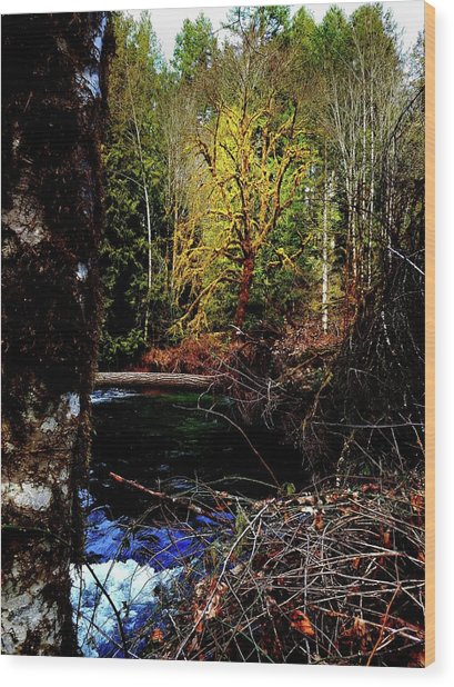 Scoggins Creek 3 Wood Print