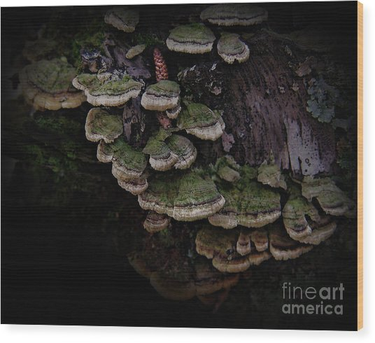 Scotopic Vision 1 - Pinecone Wood Print