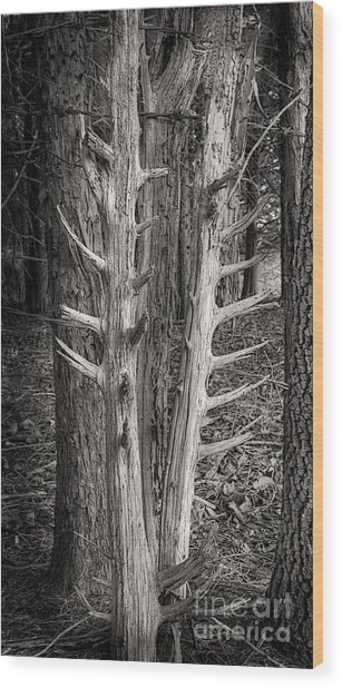 Scotopic Vision 4 - Trees Wood Print