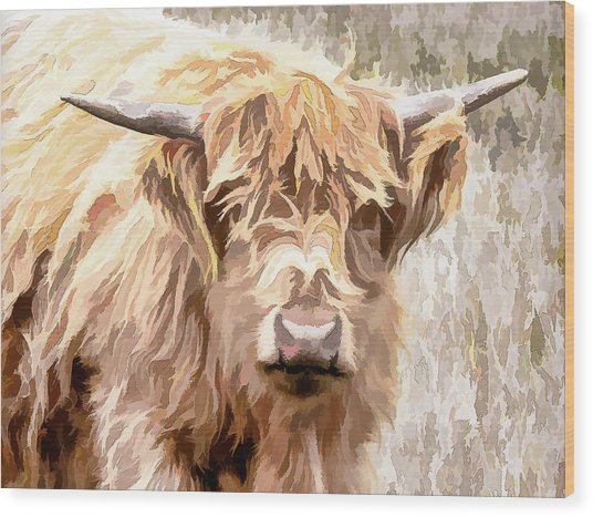 Scottish Highland Cow Wood Print