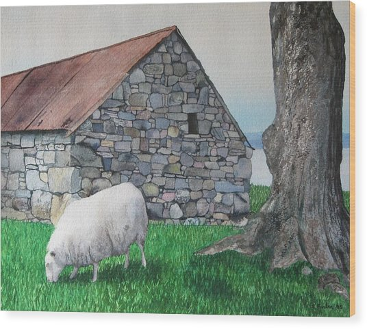 Scottish Sheep Wood Print by Sharon Farber