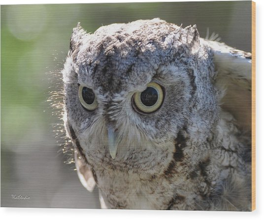 Screechowl Focused On Prey Wood Print