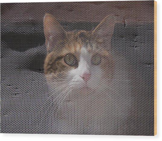 Screened Cat Wood Print