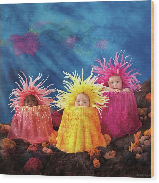 Sea Anemones  Wood Print by Anne Geddes