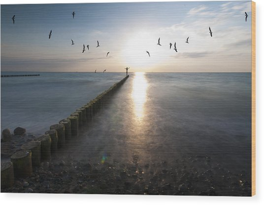 Sea Birds Sunset. Wood Print