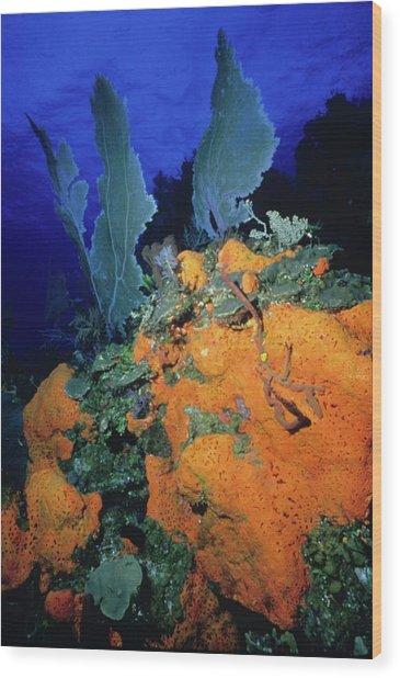 Sea Fan Collage Wood Print