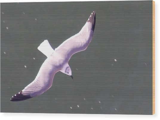 Sea Gull Offshore Wood Print by Bill Perry