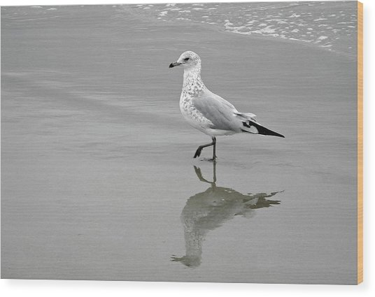 Sea Gull Walking In Surf Wood Print