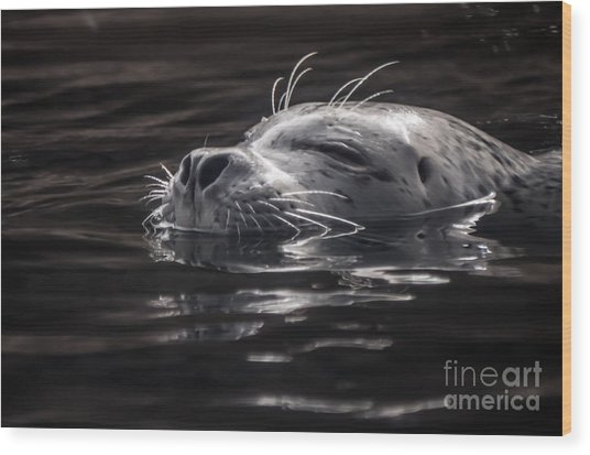 Sea Lion Basking In The Light Wood Print