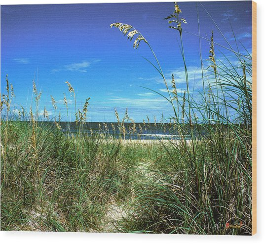 Sea Oat Dunes 11d Wood Print