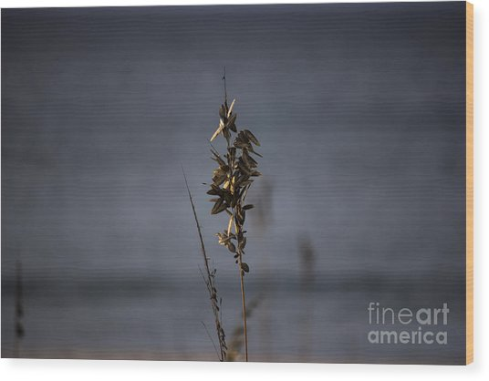Sea Oat Wood Print
