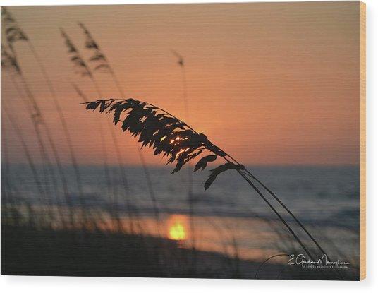 Sea Oats At Sunrise Wood Print