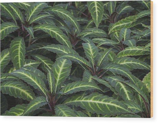Sea Of Leaves Wood Print