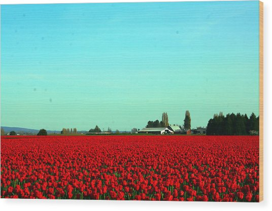 Sea Of Red Wood Print