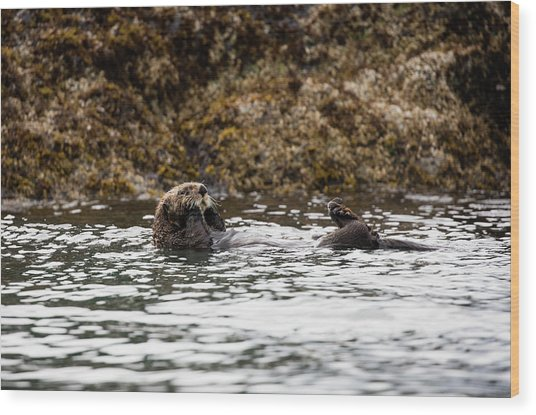 Sea Otter Floating In The Bay Wood Print