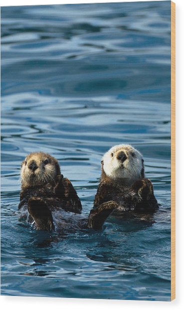 Sea Otter Pair Wood Print