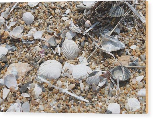 Sea Ribbons And Shells Wood Print by Marcie Daniels