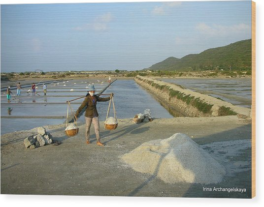 Sea Salt Harvesting In Vietnam  Wood Print