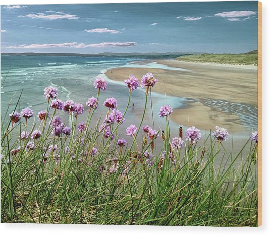 Sea Thrift Wild Flowers - On The Cliff Edge Above Tullan Strand Wood Print