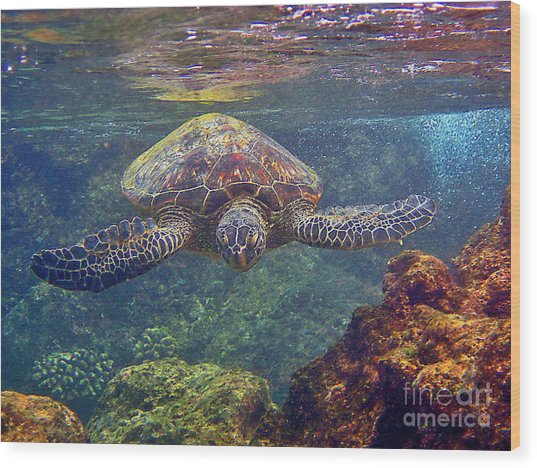 Sea Turtle - Close Up Wood Print